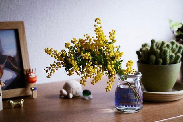 3月8日は国際女性デー。またはミモザの日だそうです。イタリアではいつもお世話になってる女性にミモザの花をプレゼントするそうです。なんて、素敵なんだ…。そもそもなぜミモザなのかと思い、調べてみると、ミモザはイタリアの土地に自生してあり、馴染み深い花でもあるので、貧富の差に関係なくどんな人も贈ることができるといことで選ばれたお花だそうです。ミモザを大量に飾ってあるお花屋さんを見て、少し下さいと言って連れて帰ってきました。春の訪れを感じるミモザ。毎年飾りたいなぁと思いつつ、季節が過ぎてしまったので念願かない、とても嬉しい。玄関に春をおむかえしました。なのに、ちょっとした油断で例の流行にのっかってしまい、しばらく動けず。節々がバキバキです。 #だしフォト #フォトグラファー #togashimiwa #花 #ミモザ #3月8日